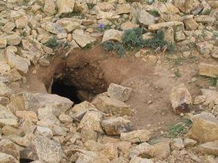タルバガンの穴.jpg